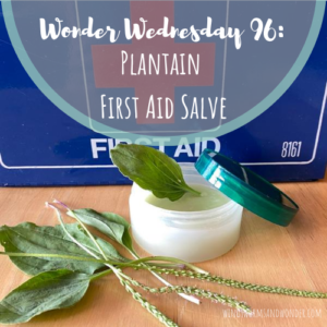 Let's celebrate Plantain herb by making a Wings, Worms and Wonder first-aid summer salve! Click to learn more about this herb and get the easy recipe!