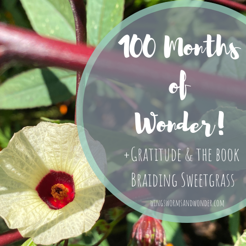 November marks the 100 month of Wonder Wednesday blog posts and activities! Click the to join the Wings, Worms, and Wonder 100 month gratitude celebrations!
