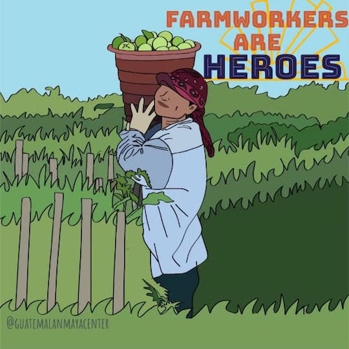 Celebrate Farmworker Awareness Week, start sprouts of your own! Click to learn more and join Wings, Worms, and Wonder in supporting farmworkers all year!