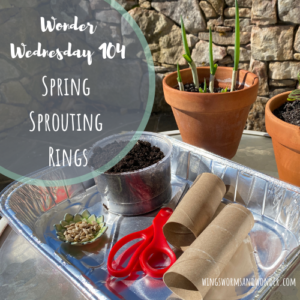 Sprout spring seeds in rings with Wings, Worms, and Wonder! Click to get the activity!